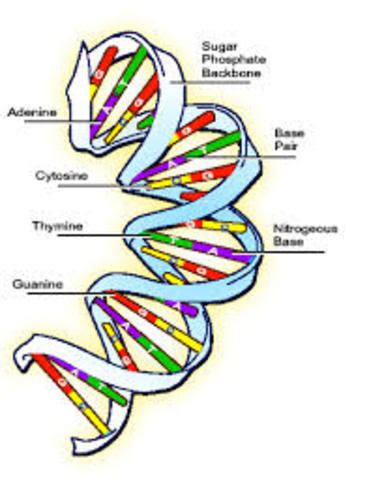 Genetic Engineering Essay - Patrick Zimmer
